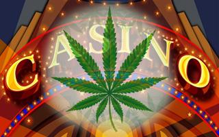 Fumer du cannabis au casino, c'est possible !